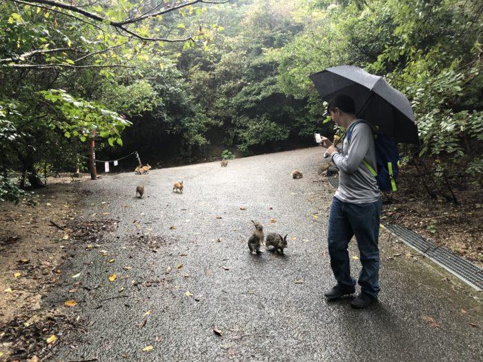 Kaniner jagar Dylan
