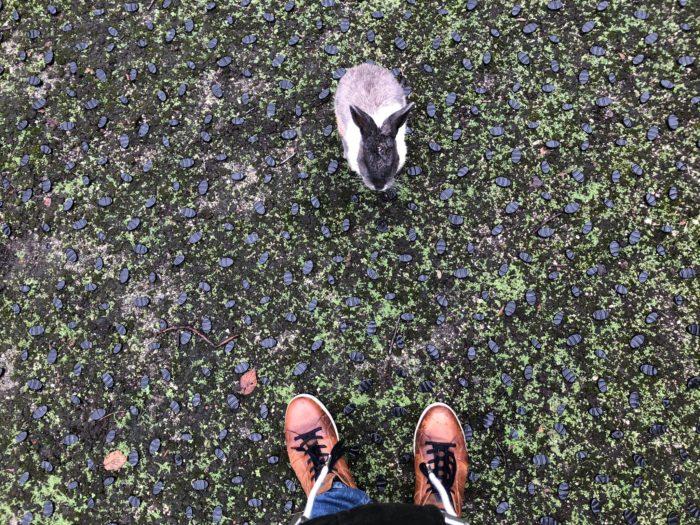 Kanin framför mig