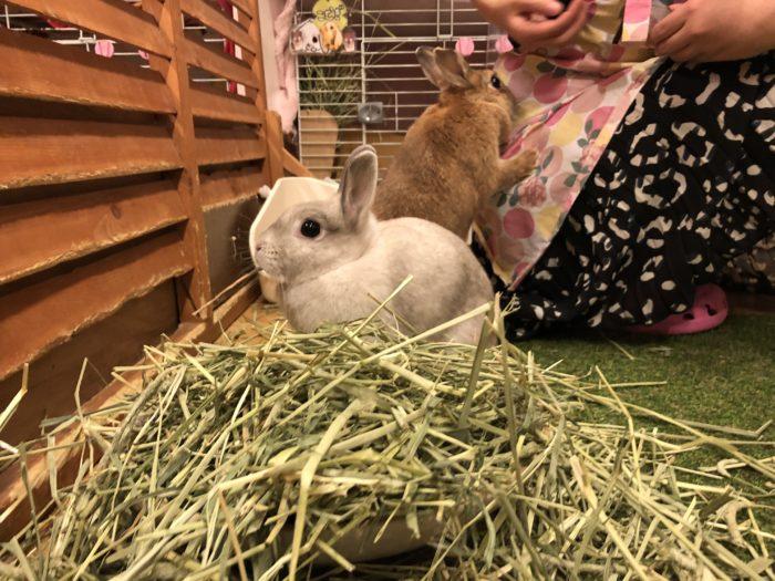 Kaninerna Spica och Chami