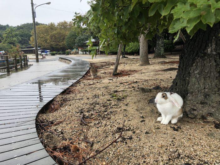 Kanin under träd i regnet